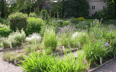 Phote of a few plant beds in the Perennial Parterre, Area perennis, The Linnaeus Garden, Uppsala university
