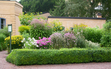 Phote of the Autumn Parterre, Area autumnalis, with flowering phlox, aster and sunflower in The Linnaeus Garden, Uppsala university